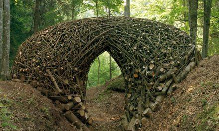 هنر زیست محیطی