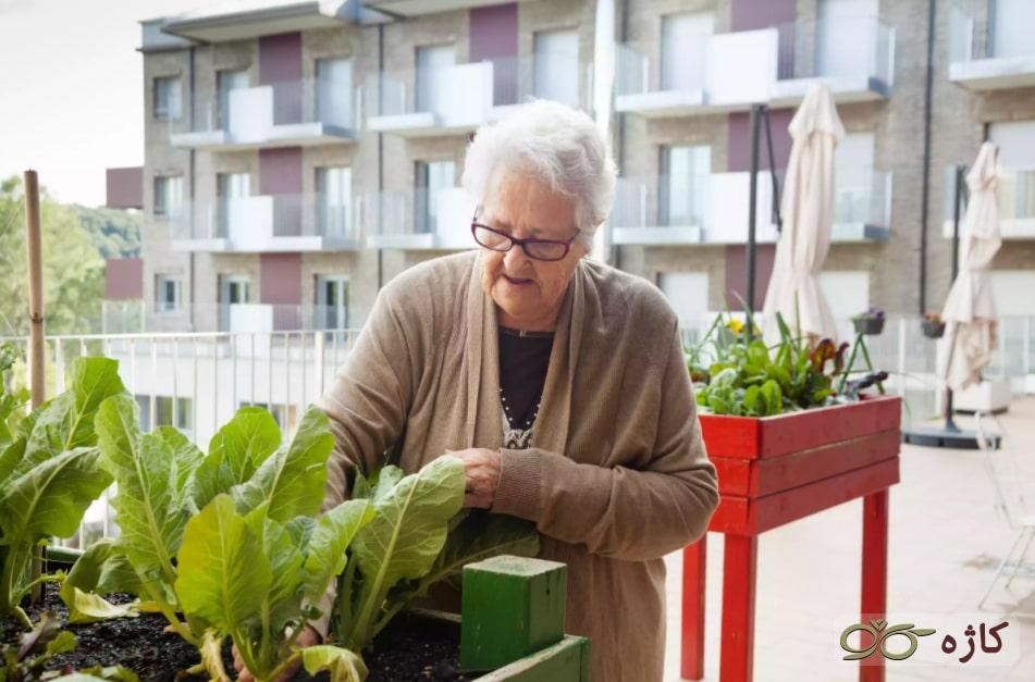 مراقبت و بهینهسازی باغچه در پشت بام